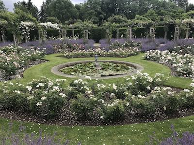 waterlilies-roses-400
